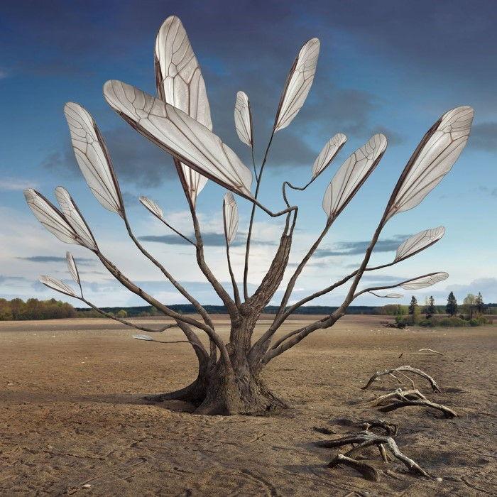 Прорастая корнями. Автор: Dariusz Klimczak.