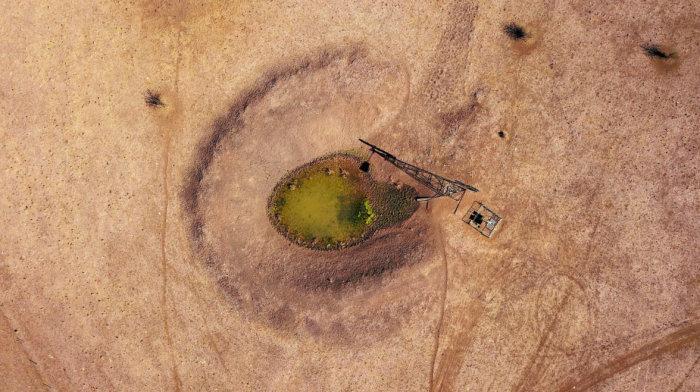 На пастбище близ города Уолджетт, которое принадлежит фермеру Мэй Мак-Каун, смогло выжить только это одиноко стоящее дерево. Оно растёт около подземного источника воды. Автор: David Gray.