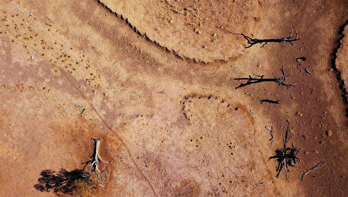 Мертвые деревья на засушливой ферме Скотта Купера. Автор: David Gray.