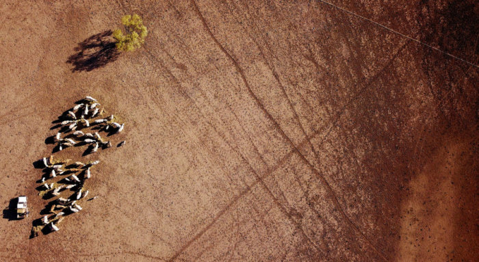От сильнейшей засухи пострадало 98% территории штата Новый Южный Уэльс, две трети территории штата Квинсленд. Автор: David Gray.