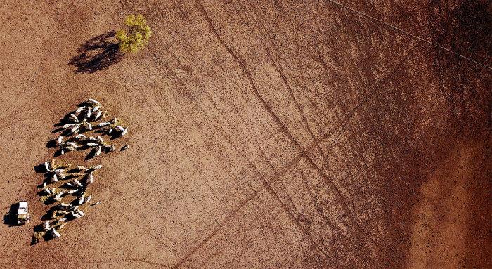 Правительство Австралии уже потратило 1 млрд долларов на помощь пострадавшим от засухи фермерам. Автор: David Gray.