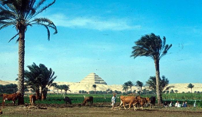 Фермер пашет поле, Ступенчатая пирамида Джосера на заднем плане. Фотограф: Eliot Elisofon, 1965 год