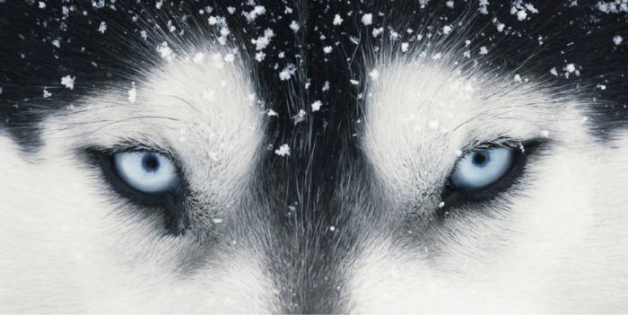 Глаза Клеопатры. Автор: Tim Flach.