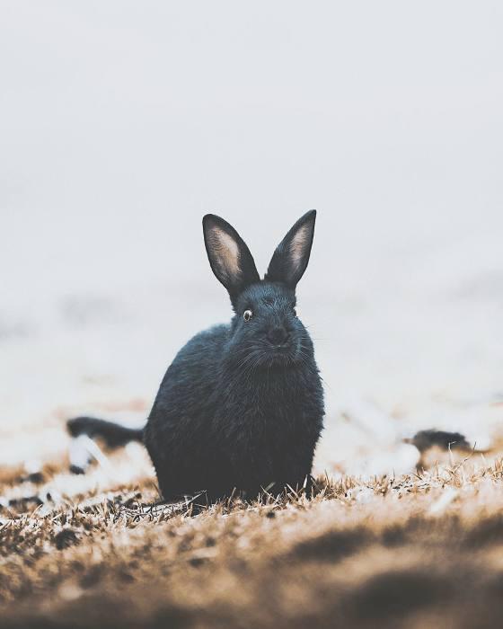 Счастливый кролик. Автор: Donal Boyd.