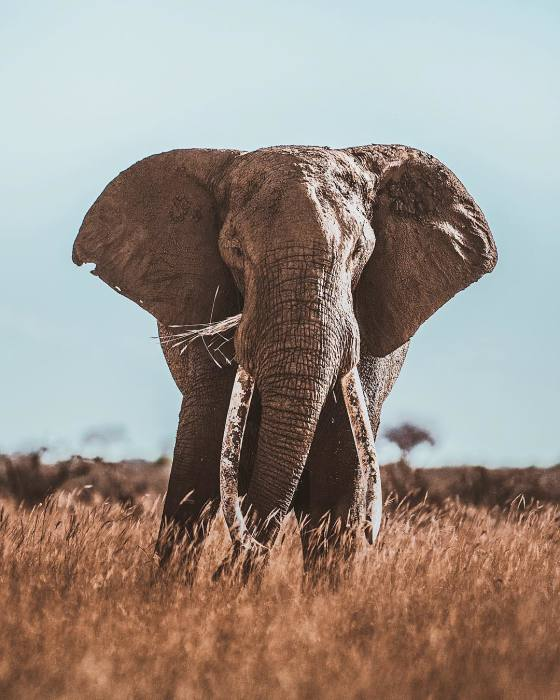 Слон. Автор: Donal Boyd.
