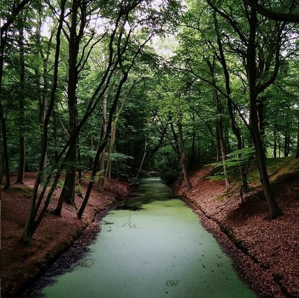 Волшебный лес. Автор фото: Ээлко Рус (Eelco Roos).