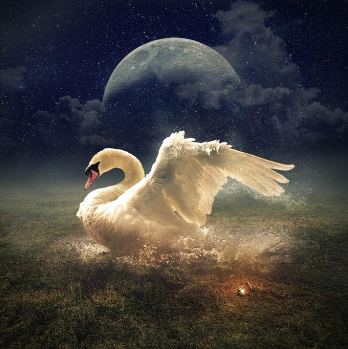 Белый лебедь. Автор: Even Liu.