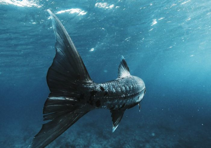 Подводная съёмка. Автор: Justin Edward Okoye.