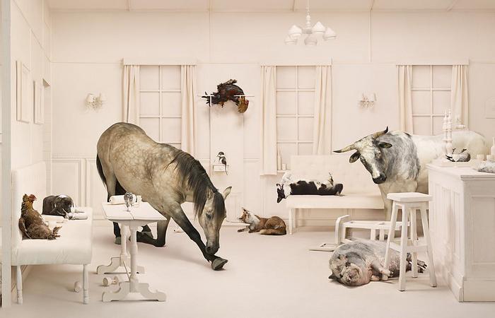 Пьяные животные. Автор: Frieke Janssens.