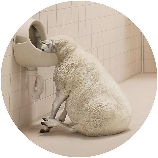 Скандальная антиалкогольная серия фотографий, в которой животные так похожи на людей