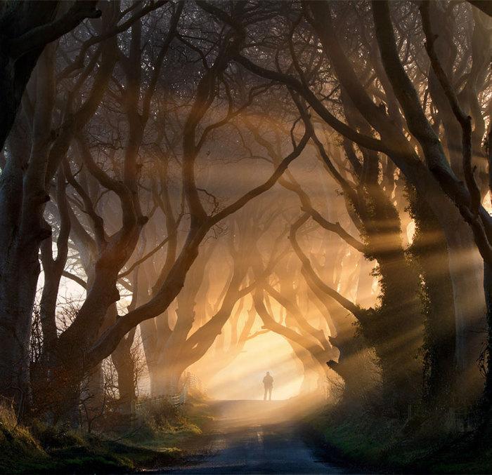 Туннель из деревьев в 1 эпизоде 2 сезона: буковая аллея «Темная изгородь» (Дарк Хеджес / Dark Hedges) в графстве Антрим, Северная Ирландия. Автор фото: Стивен Эмерсон.