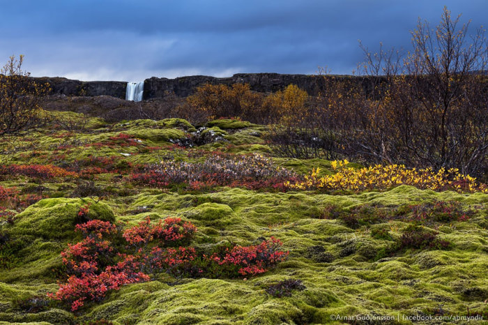 К северу от Вестероса: долина Тингведлир (Тингвеллир), Исландия.