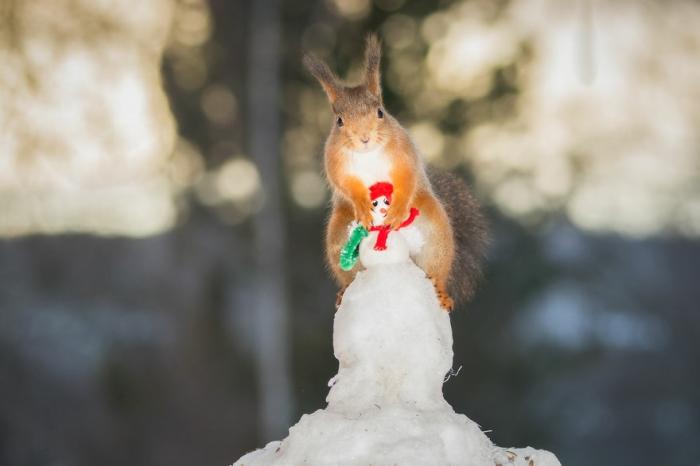 Снеговик и белка. Автор: Geert Weggen.