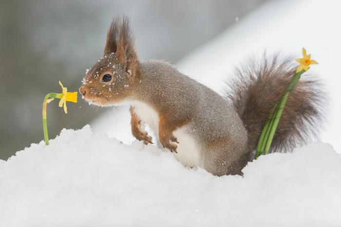 Аромат зимних цветов. Автор: Geert Weggen.