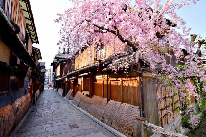 Сакура. \ Фото: zekkeijapan.com.