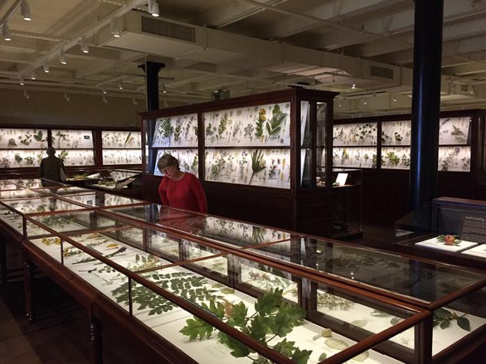 Коллекция стеклянных растений и цветов Гарвардского Музея естественной истории. \ Фото: lindahall.org.
