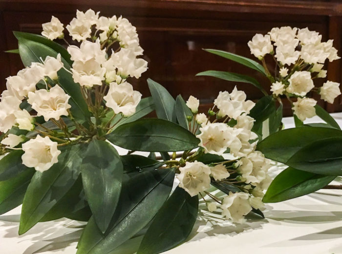 Стеклянные цветы из коллекции Гарварда. \ Фото: google.com.ua.