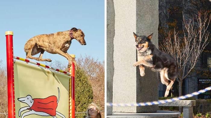 Собаки, попавшие в Книгу рекордов Гиннесса 2019.
