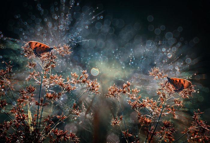 Бабочки с эффектом боке.