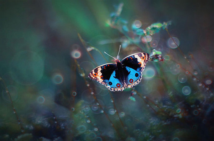 Волшебная бабочка.