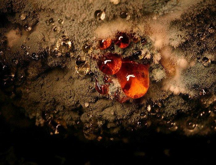 Картофельная плесень. Автор фото Хейкки Лейс (Heikki Leis).