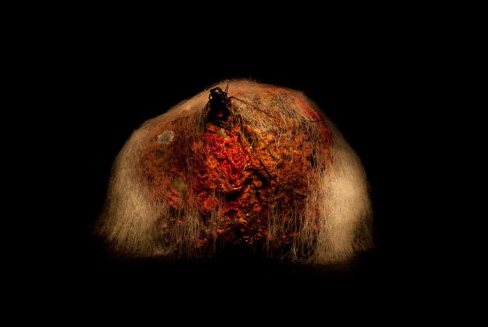 Плесневеющая свекла. Автор фото: Хейкки Лейс (Heikki Leis).