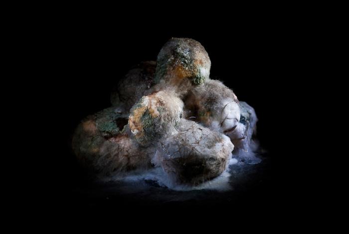 Плесневелый картофель. Автор фото: Хейкки Лейс (Heikki Leis).