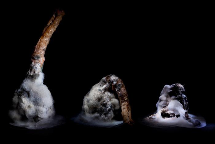 Заплесневелый корень петрушки. Автор фото: Хейкки Лейс (Heikki Leis).