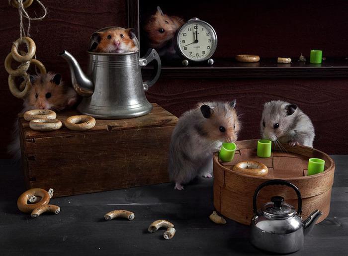 Чай с сушками в коммунальной квартире. Автор фото: Елена Еремина.