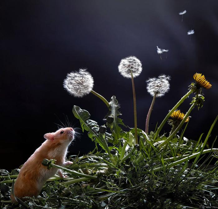 Мечты-мечты... Автор фото: Елена Еремина.