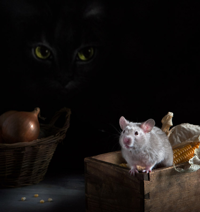 Кошки-мышки. Автор фото: Елена Еремина.