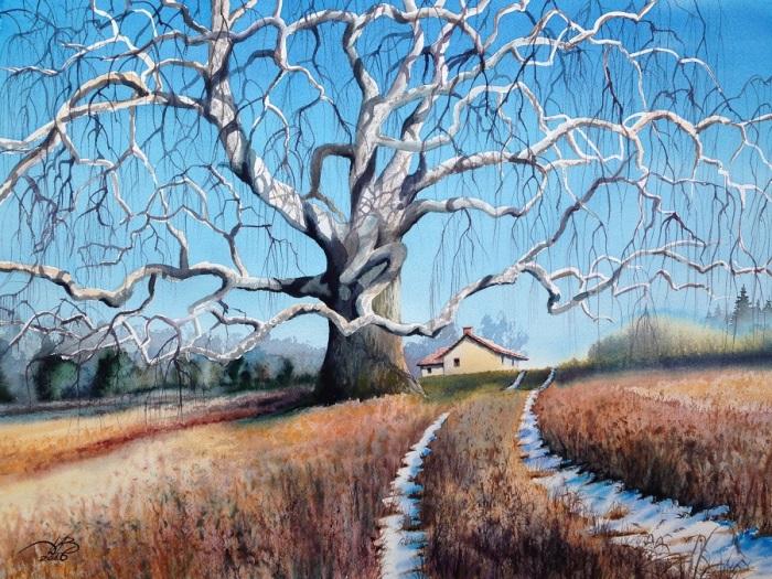 Старое дерево. Автор: Игорь Дубовой.
