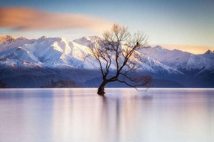 Дерево Ванака,  Южный остров, Новая Зеландия. Автор: Jack Bolshaw и Marta Kulesza.