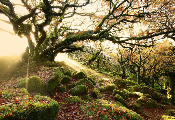 Леса Вистмен, Англия. Автор фото: James Appleton.