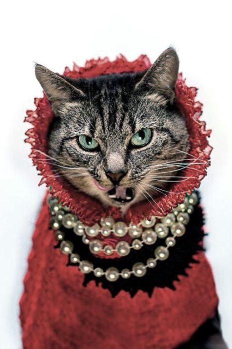 Дерзкая дворянка.