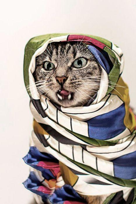 Восточная кошка.