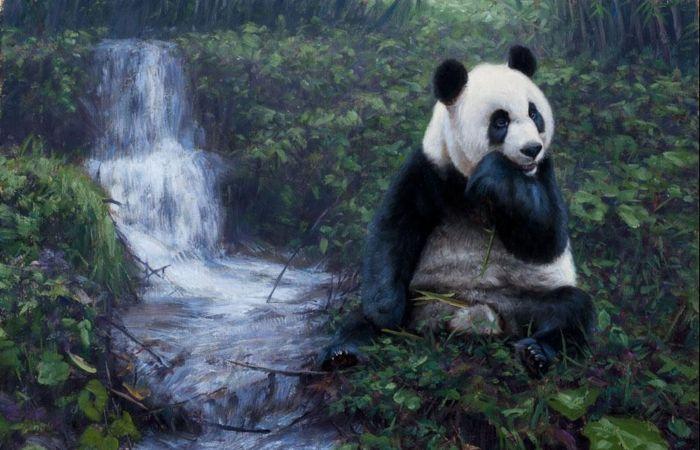 Панда. Автор: John Banovich.