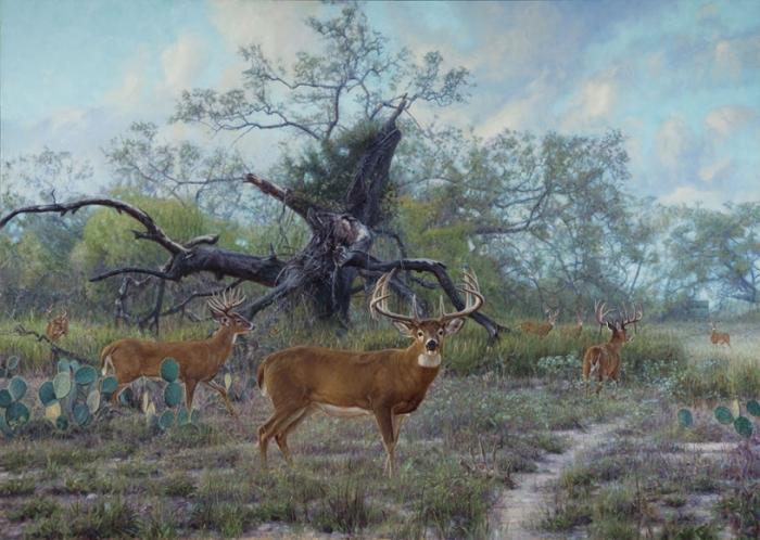 Львы наблюдают за стадом буйволов. Автор: John Banovich.