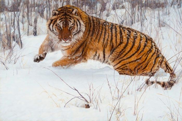 Тигр и мышонок. Автор: John Banovich.