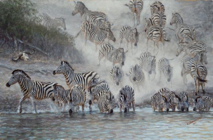 Зебры на водопое. Автор: John Banovich.