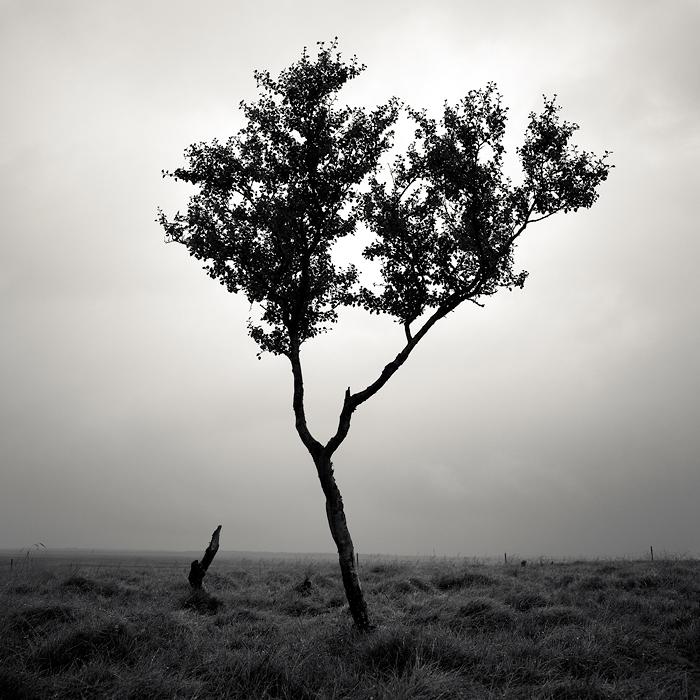 Дерево в дождь, Исландия. Автор: Josef Hoflehner.