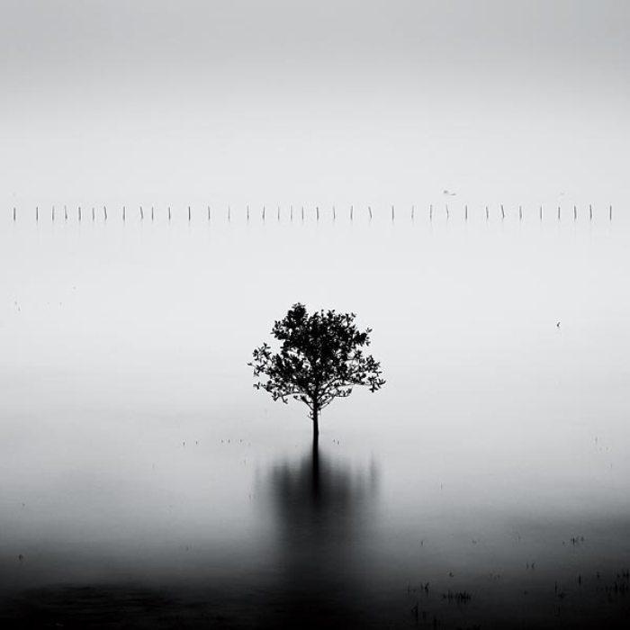 Мангровое дерево из серии «Вьетнам». Автор: Josef Hoflehner.