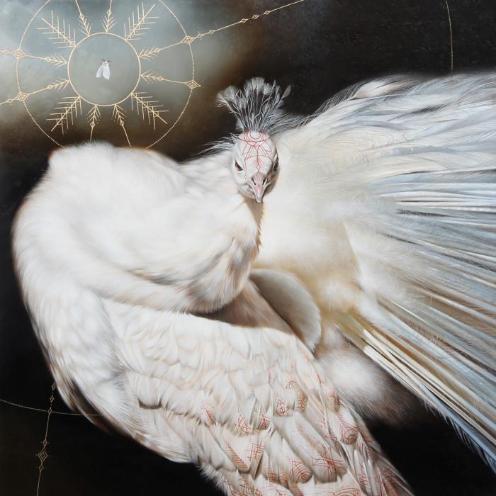 Белый павлин. Автор: Josie Morway.