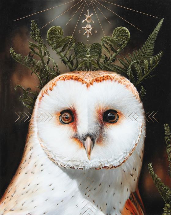 Белая сова. Автор: Josie Morway.