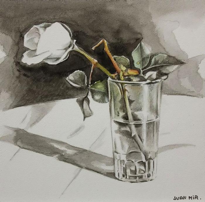 Белая роза в стакане. Автор: Juan Mir.