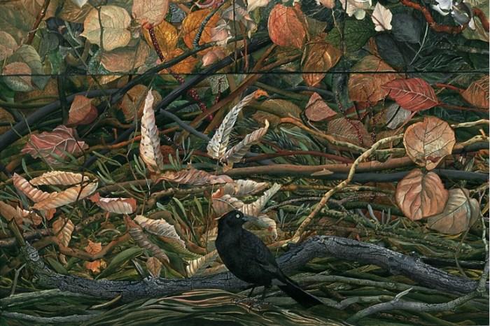 Ворон среди опавших листьев. Автор: Judy Garfin.