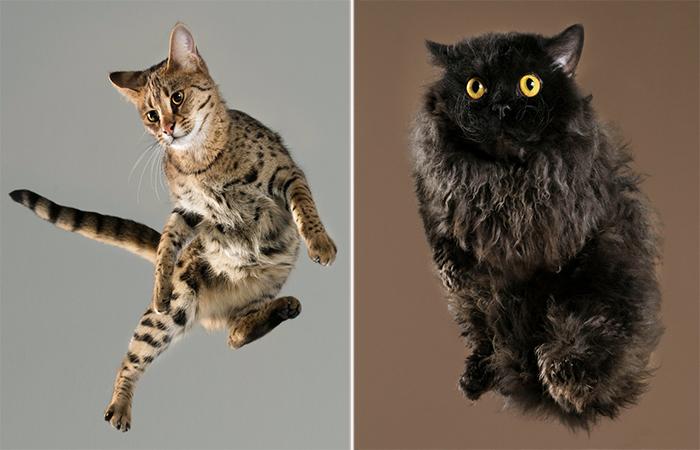 Летающие коты. Автор: Julia Christe.
