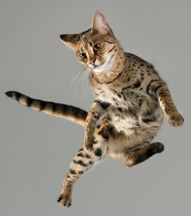 Все коты летают высоко. Автор: Julia Christe.