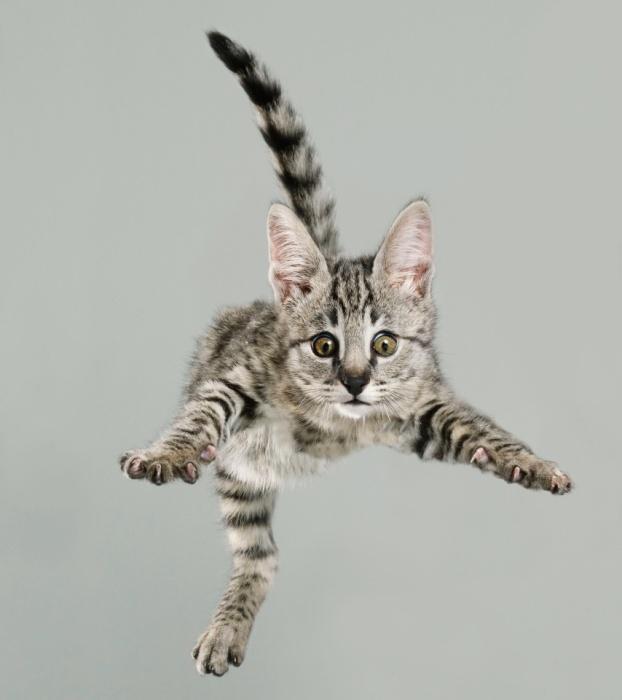 А говорят, коты не умеют летать! Автор Julia Christe.