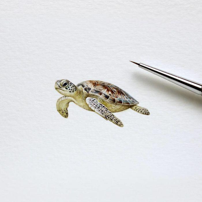 Черепаха. Автор: Julia Las.